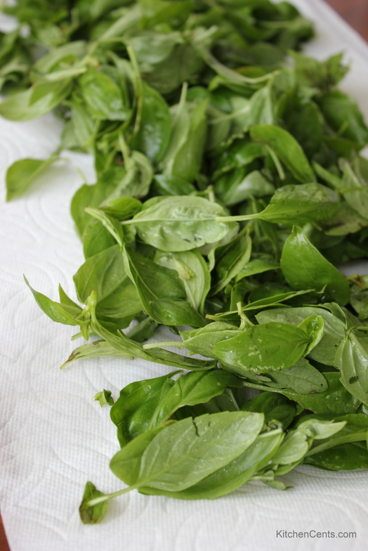 Basil | KitchenCents.com